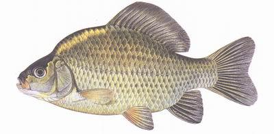 Atlas Sladkovodnich Ryb